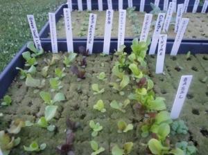 Lã de Rocha - Acusterm isolamentos termicos e acusticos uso em plantação e jardinagem